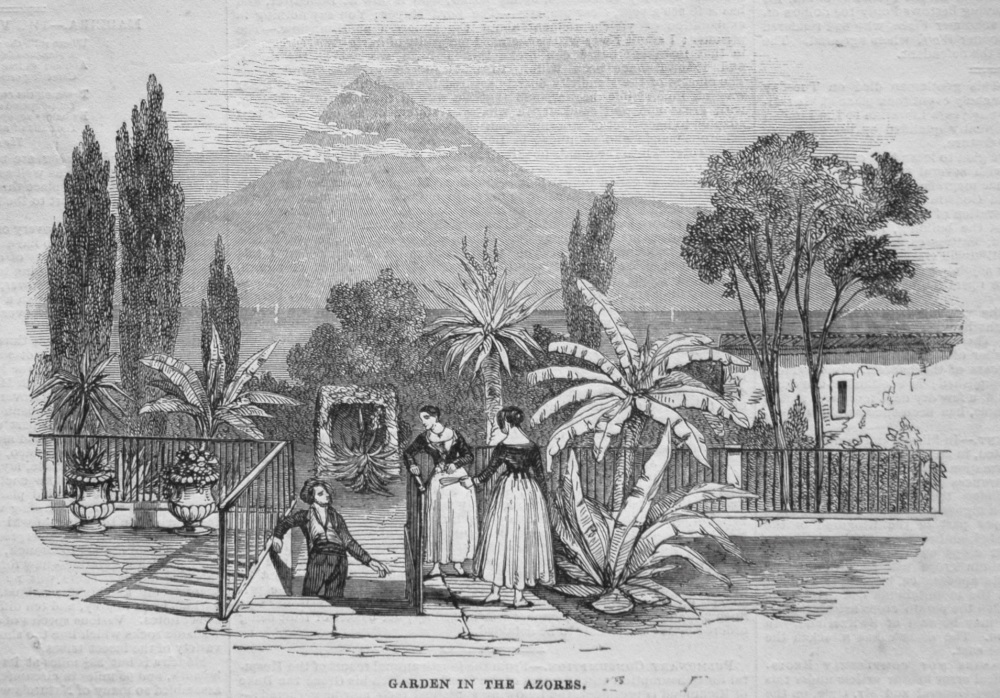 Garden in the Azores. 1845