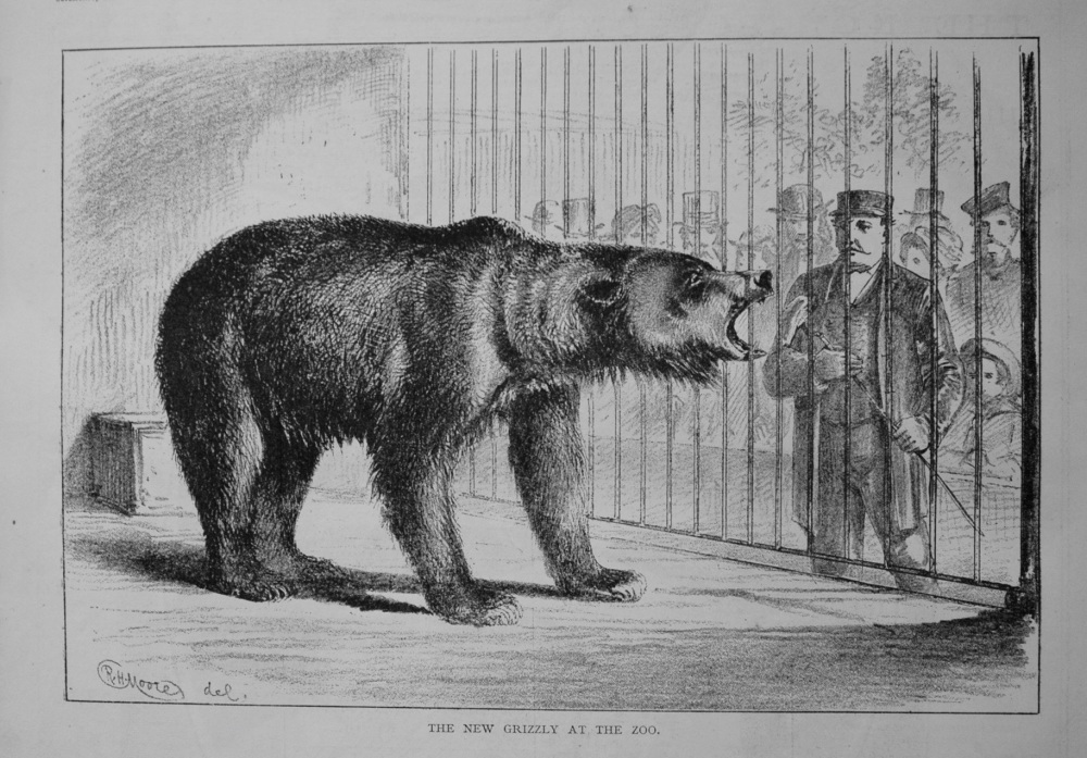 The New Grizzly at the Zoo. 1876