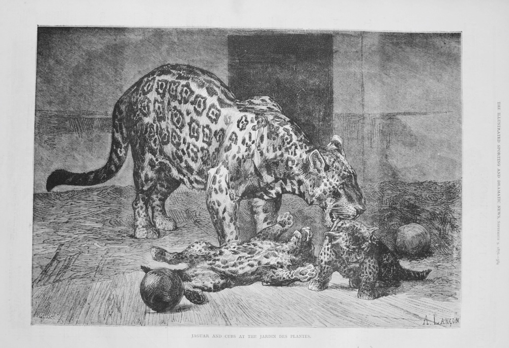 Jaguar and Cubs at the Jardin Des Plantes. 1876