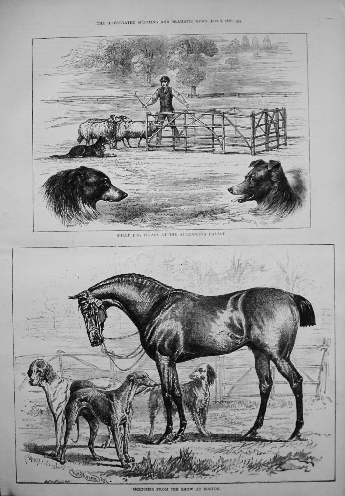 Sheep Dog Trials at the Alexandra Palace. 1876