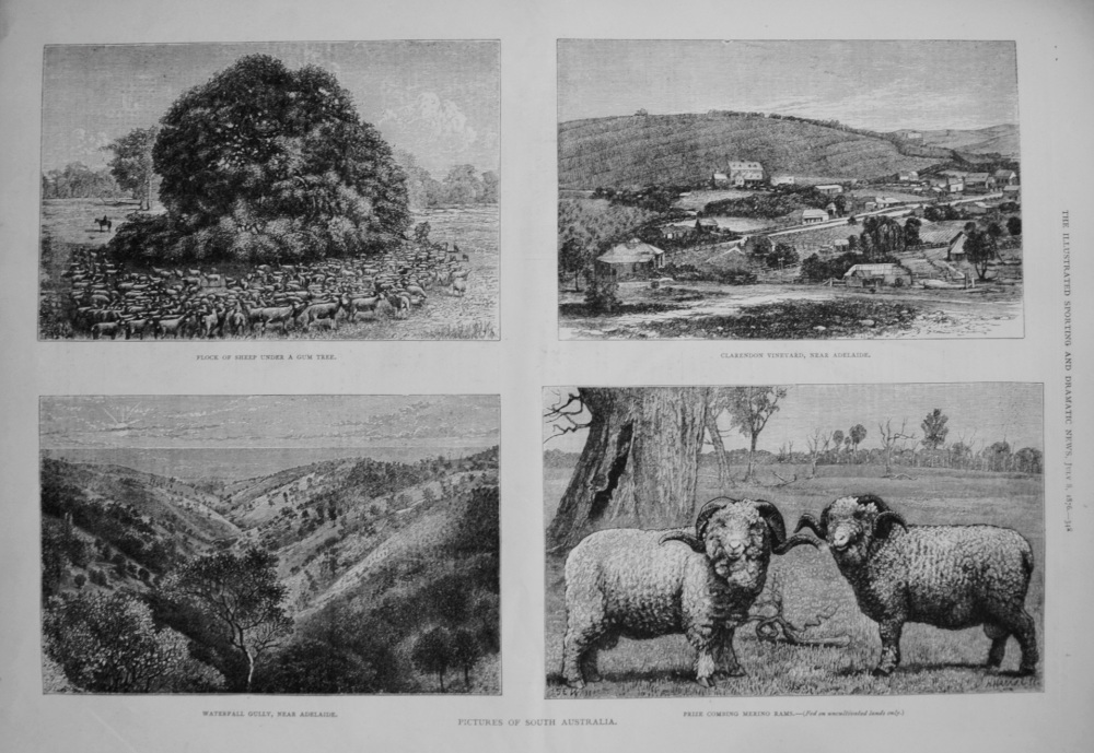 Pictures of South Australia. 1876