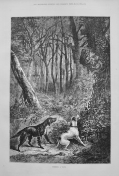 Treeing a 'Coon. 1876