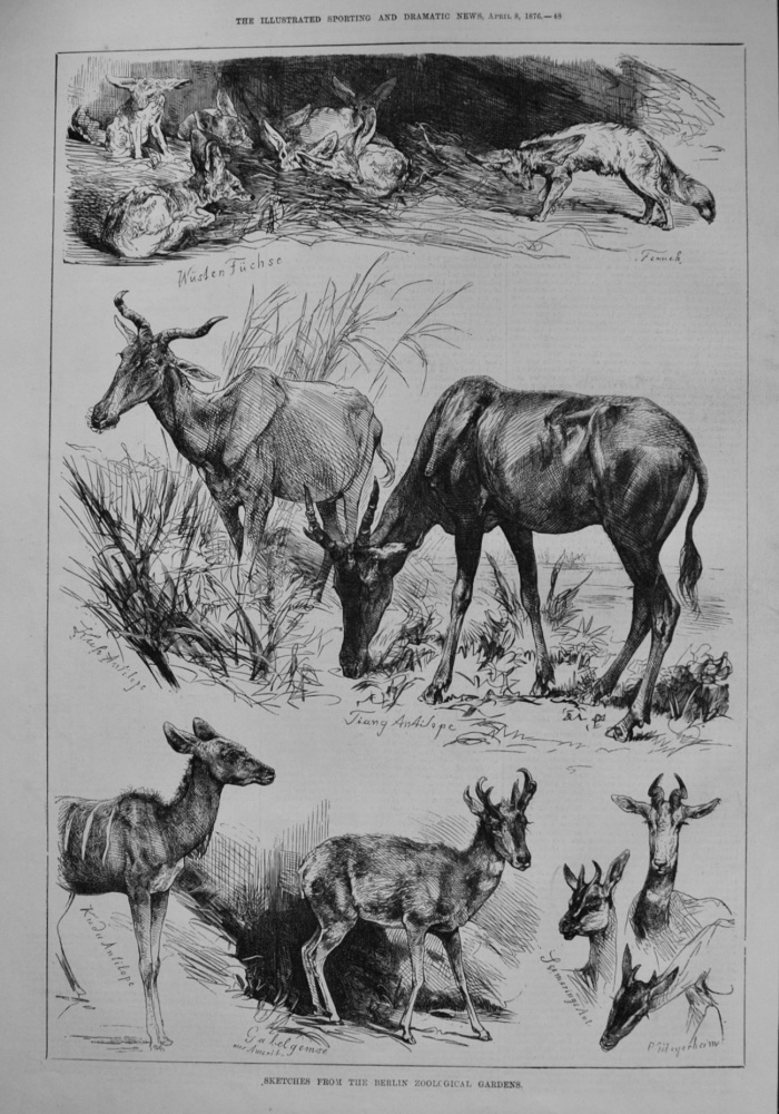 Sketches from the Berlin Zoological Gardens. 1876