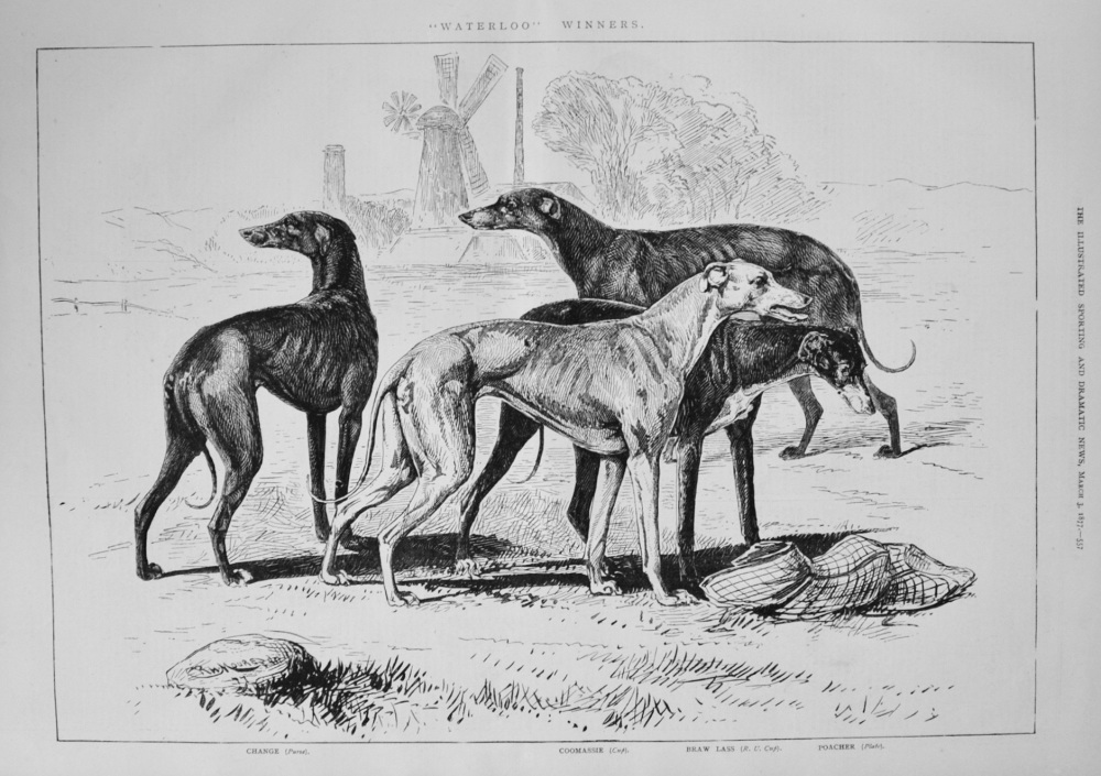 """Waterloo"" Winners. 1877"