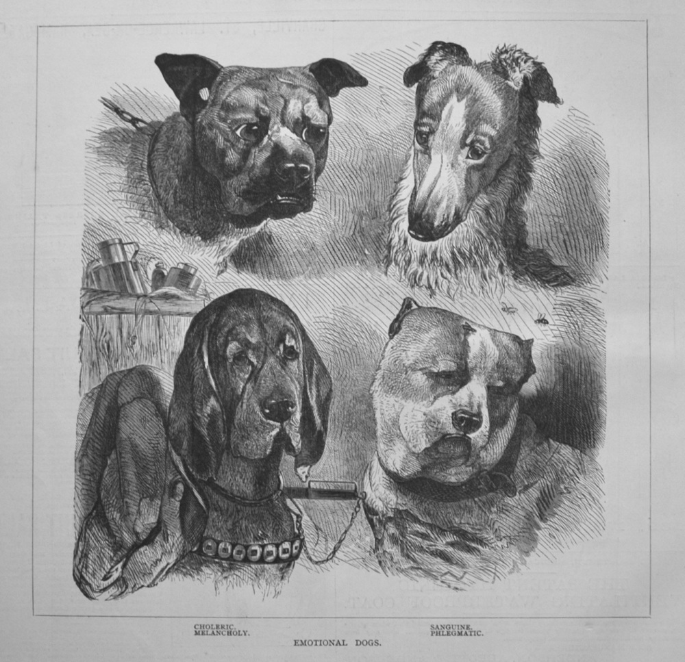 Emotional Dogs. 1877