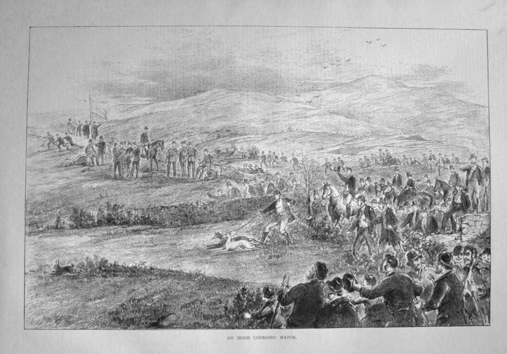 An Irish Coursing Match. 1877