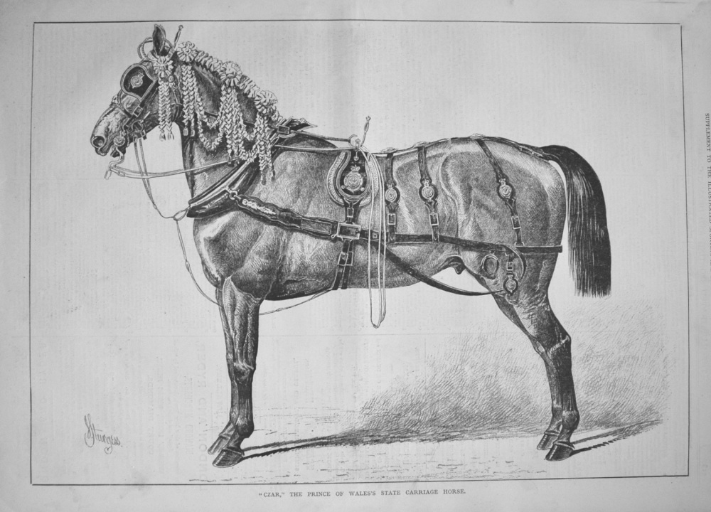 """""""Czar,"""" the Prince of Wales's State Carriage Horse. 1877"""
