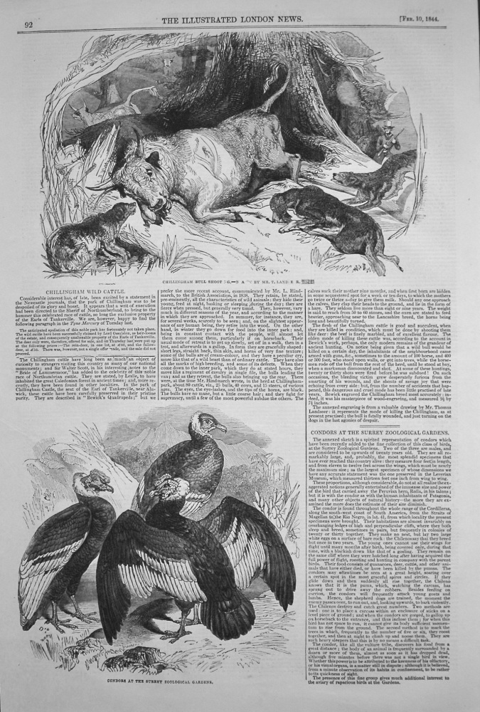 Chillingham Wild Cattle. Condors at the Surrey Zoological Gardens. 1844