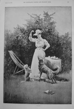 """Halves!"" 1895"