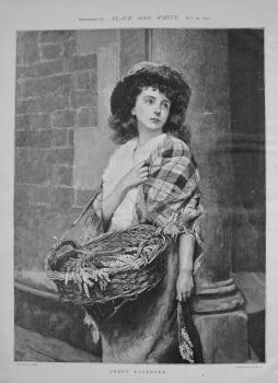Sweet Lavender. 1892
