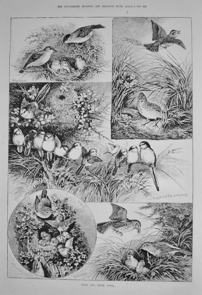 Birds and their Nests. 1887