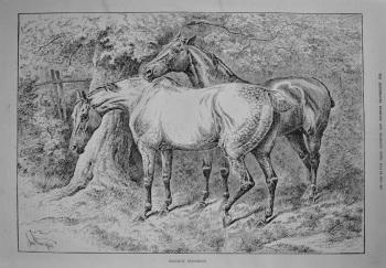 Tranquil Enjoyment. 1887