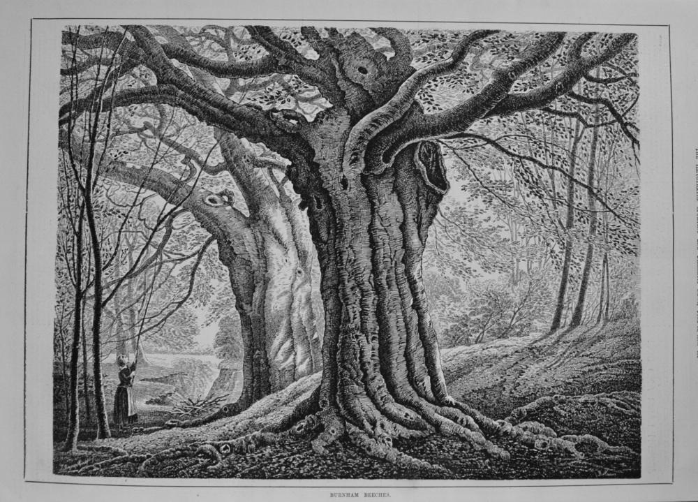 Burnham Beeches. 1887