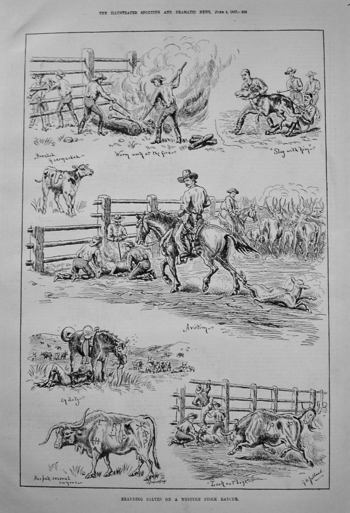 Branding Calves on a Western Stock Ranche. 1887