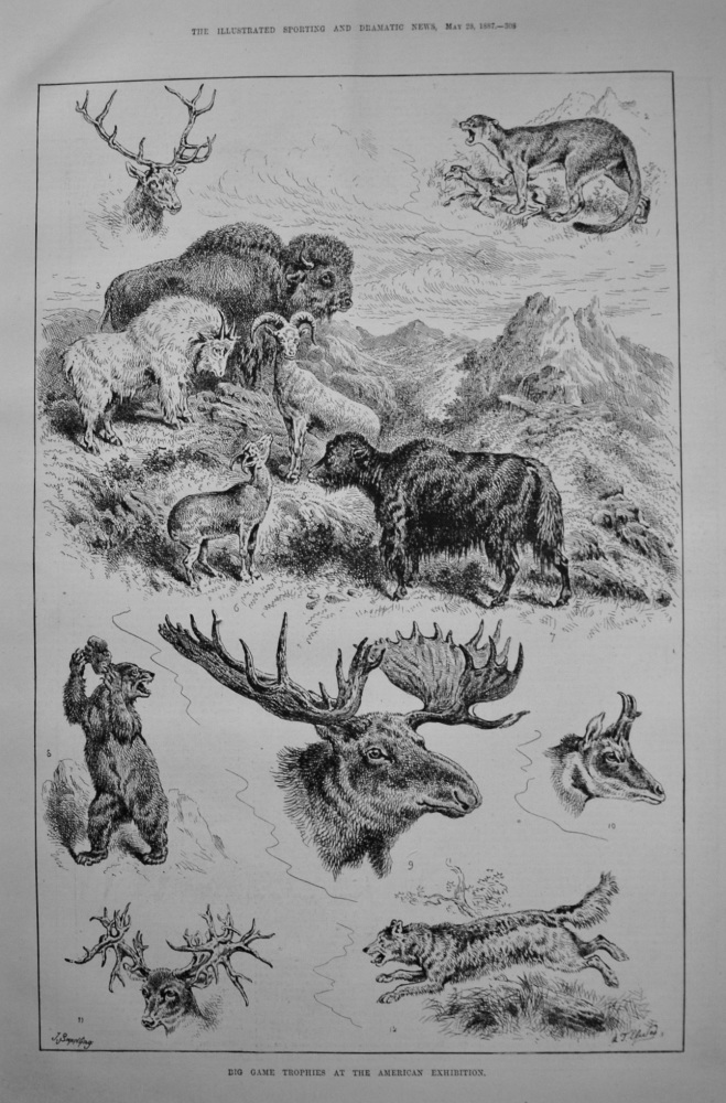 Big Game Trophies at the American Exhibition. 1887