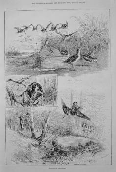 Woodcock Shooting. 1887