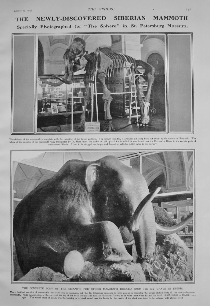 The Newly-Discovered Siberian Mammoth. 1903