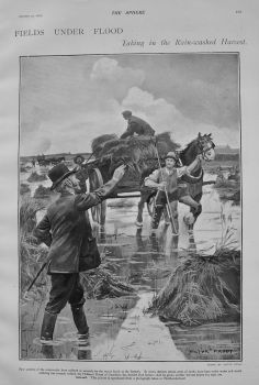 Fields Under Flood : Taking in the Rain-washed Harvest. 1903