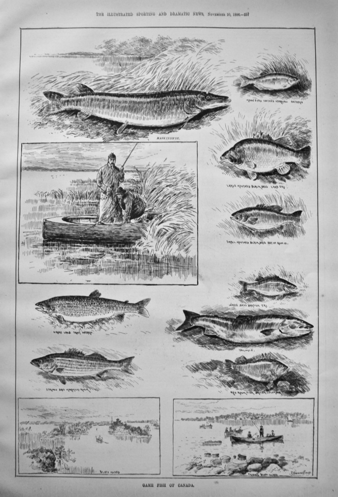 Game Fish of Canada. 1886