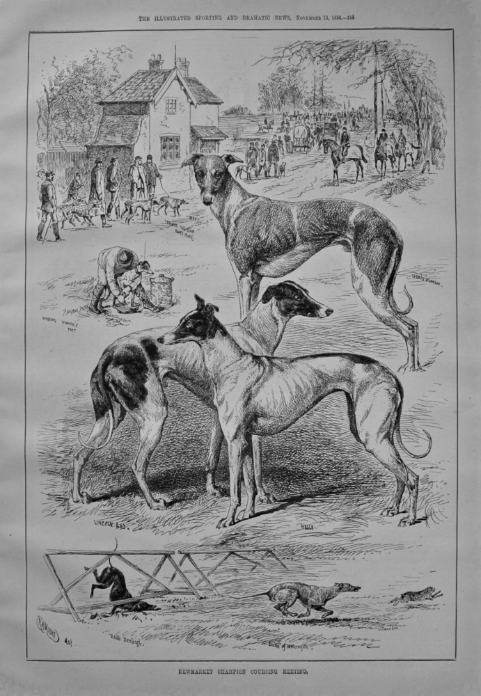 Newmarket Champion Coursing Meeting. 1886