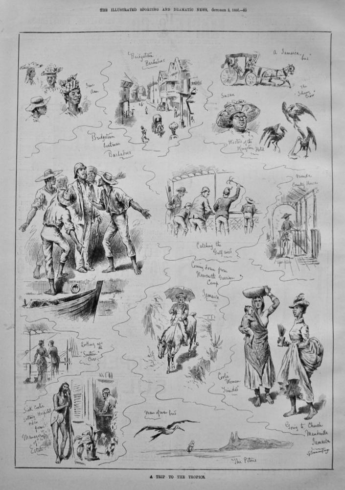 A Trip to the Tropics. 1886