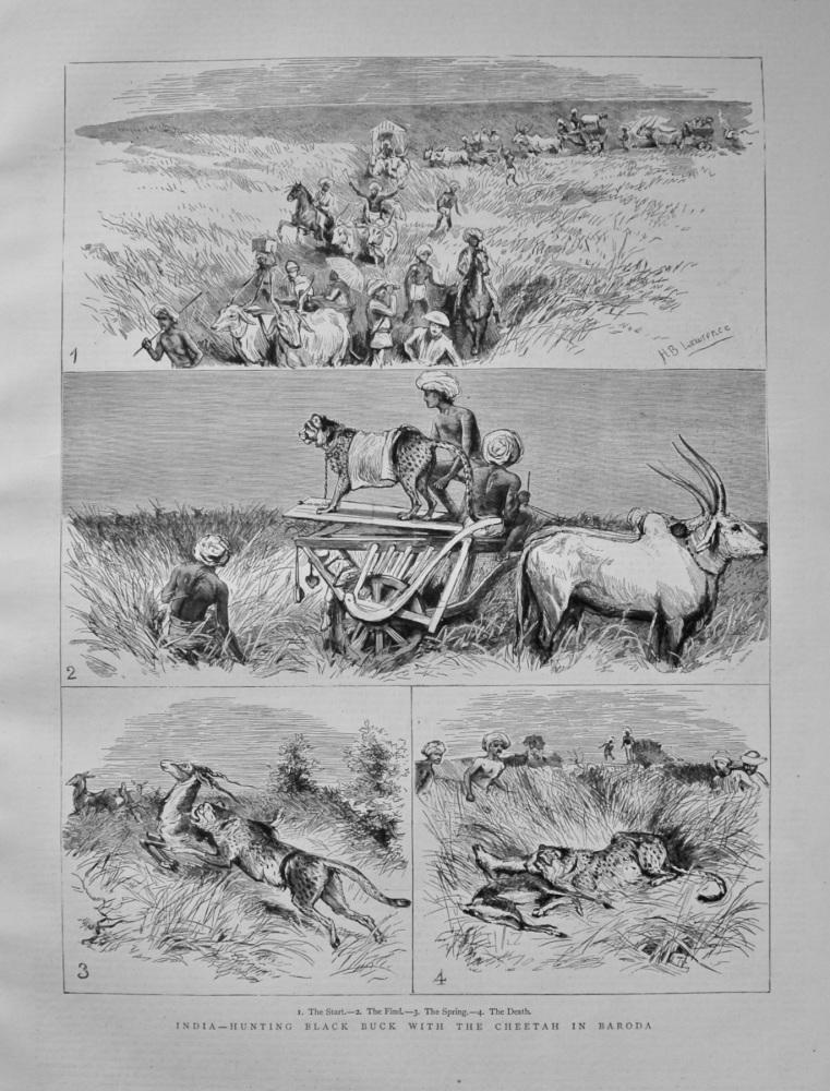 India - Hunting Black Buck with the Cheetah in Baroda. 1882