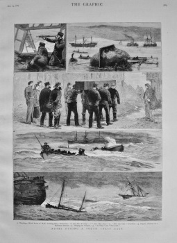 Notes During a South Coast Gale. 1882