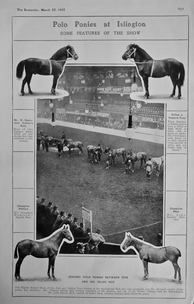 Polo Ponies at Islington : Some Features of the Show. 1907