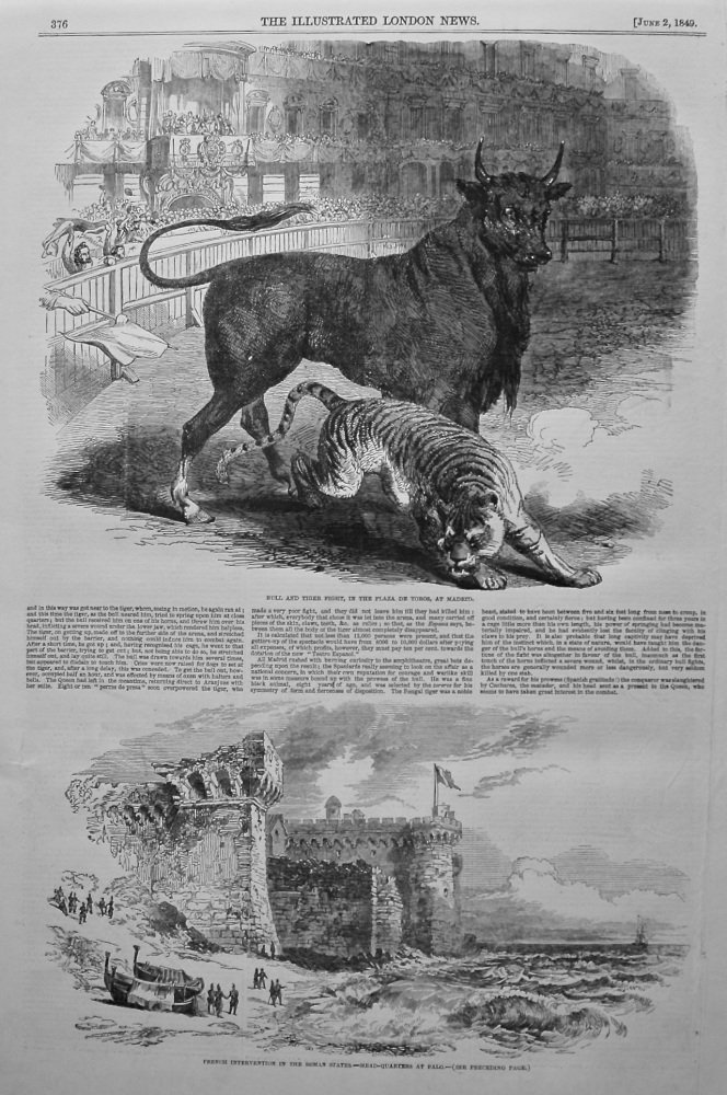 Bull and Tiger Fight, at Madrid. 1849.