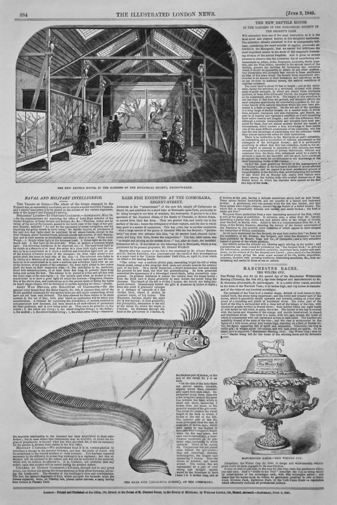 Rare Fish Exhibited at the Cosmorama, Regent-Street. (Regalecus Glesne) 1849.