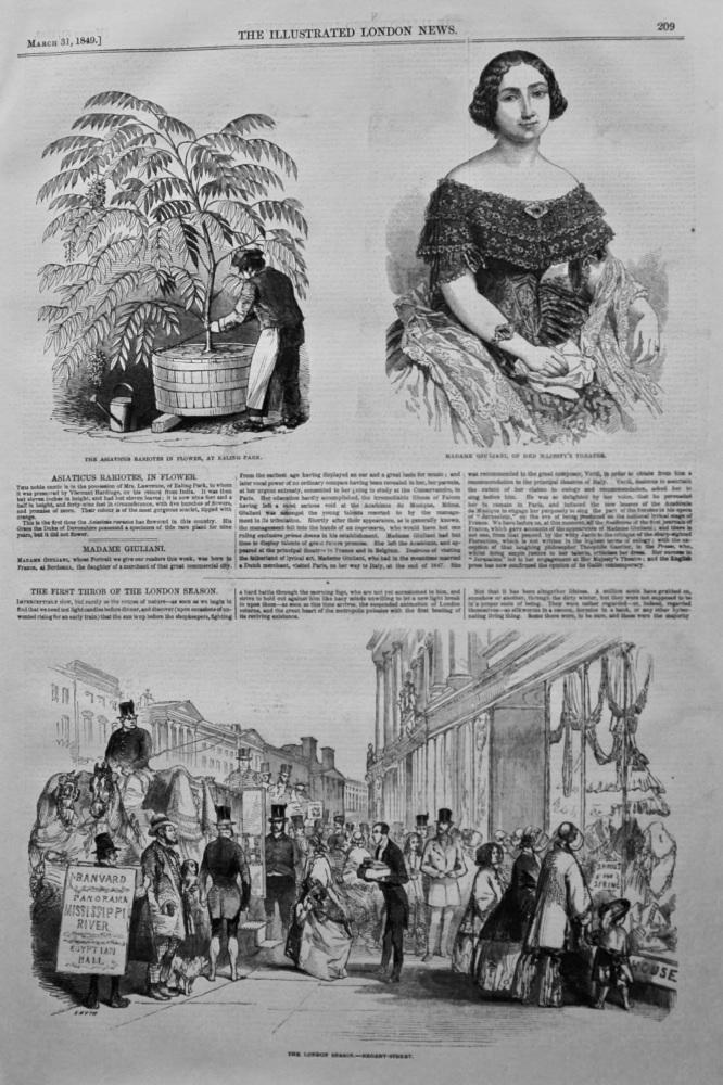 Madame Giuliani. 1849.