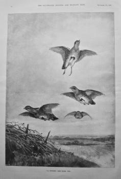 """""""A Towered Bird - Mark Him!."""" 1897."""