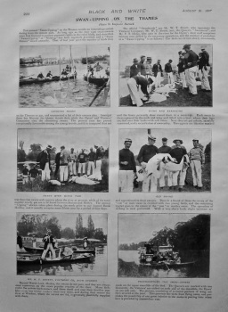 Swan-Upping on the Thames. 1897.