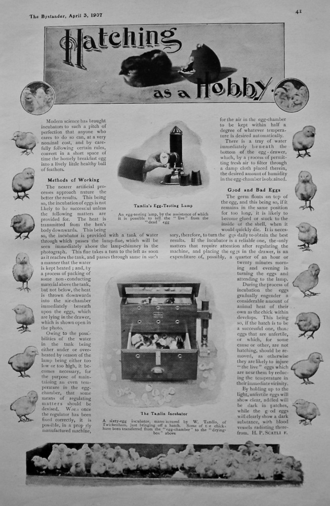 Hatching as a Hobby. 1907.