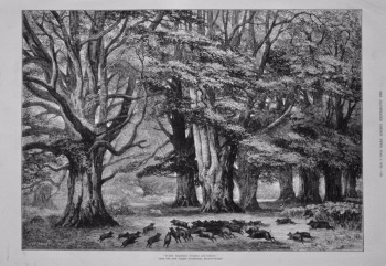"""Bushy Brattley During Beechmast."" (From the New Forest Exhibition, Regent-Street.) 1875."