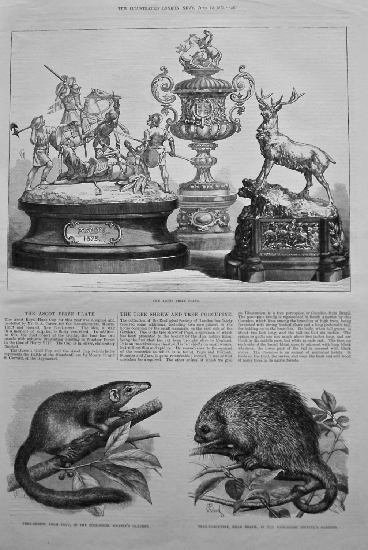 The Tree Shrew and Tree Porcupine. 1875.