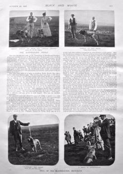 The Bloodhound Trials, Browmoor. 1898.