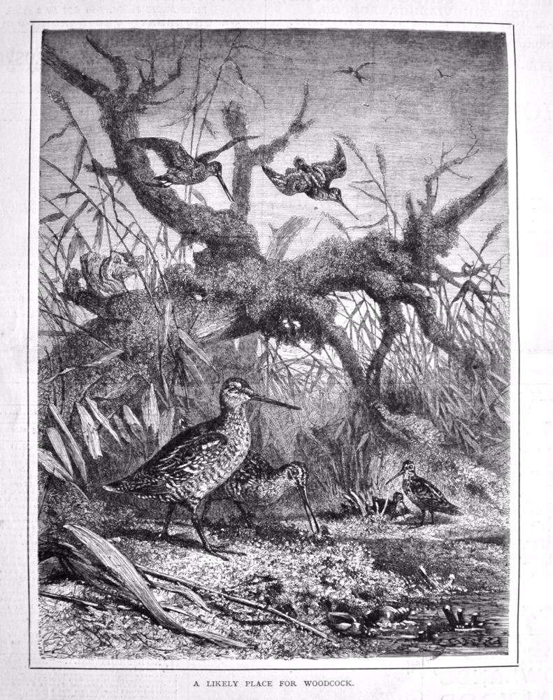 A Likely Place for Woodcock. 1879.