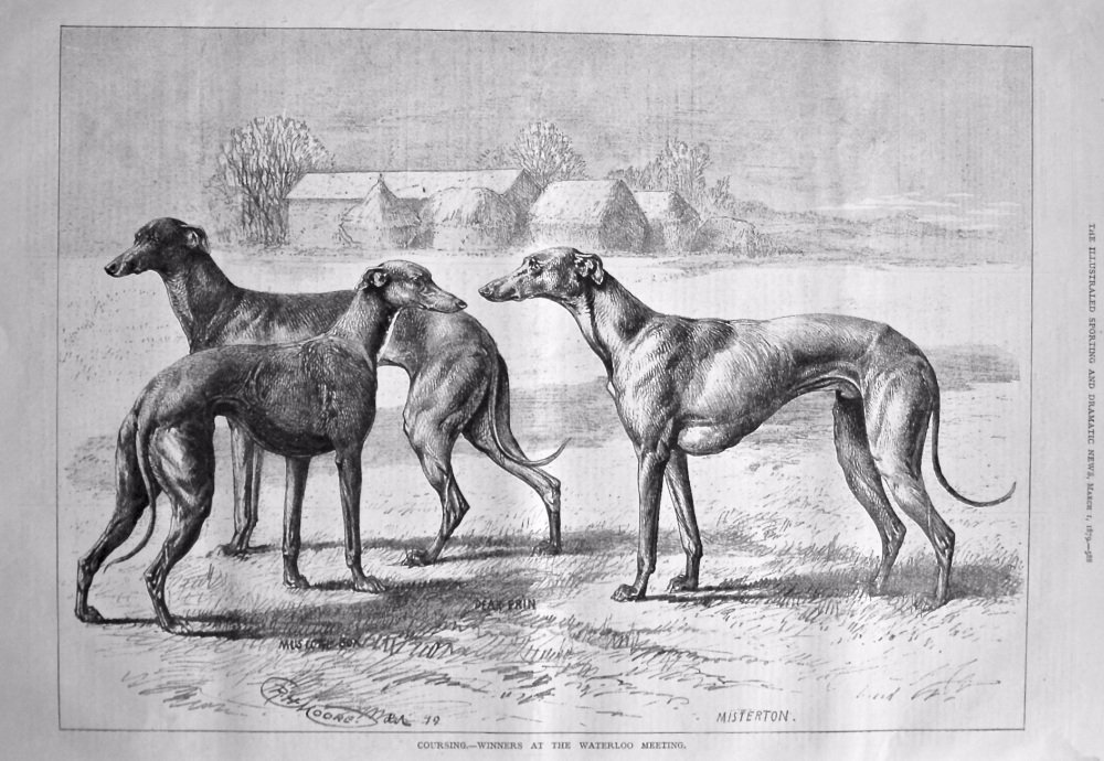 Coursing.- Winners at the Waterloo Meeting. 1879.