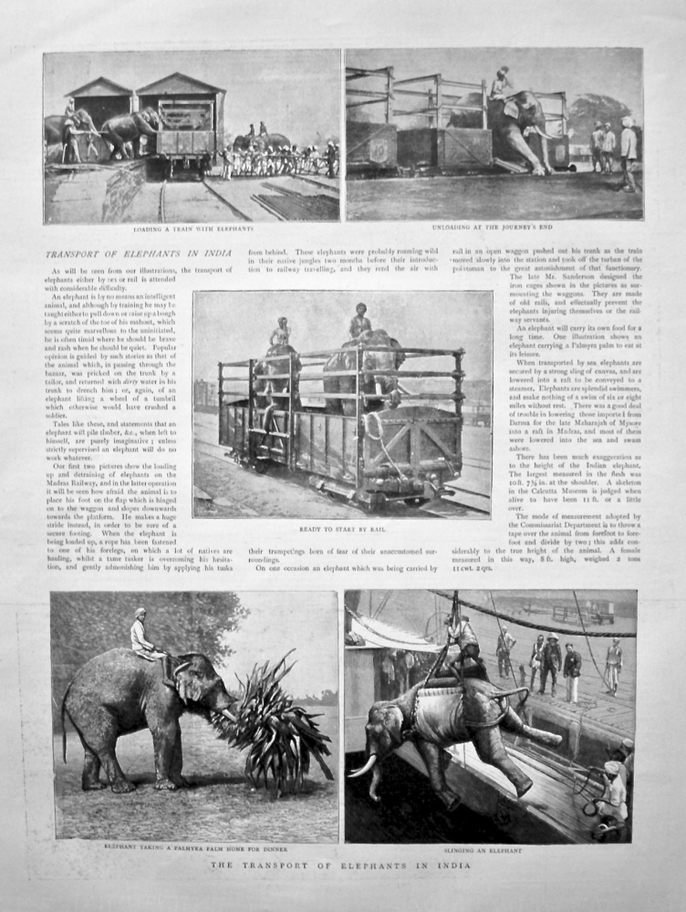 Transport of Elephants in India. 1898.
