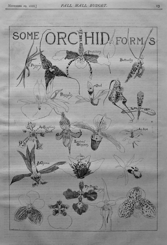 Some Orchid Forms. 1888.