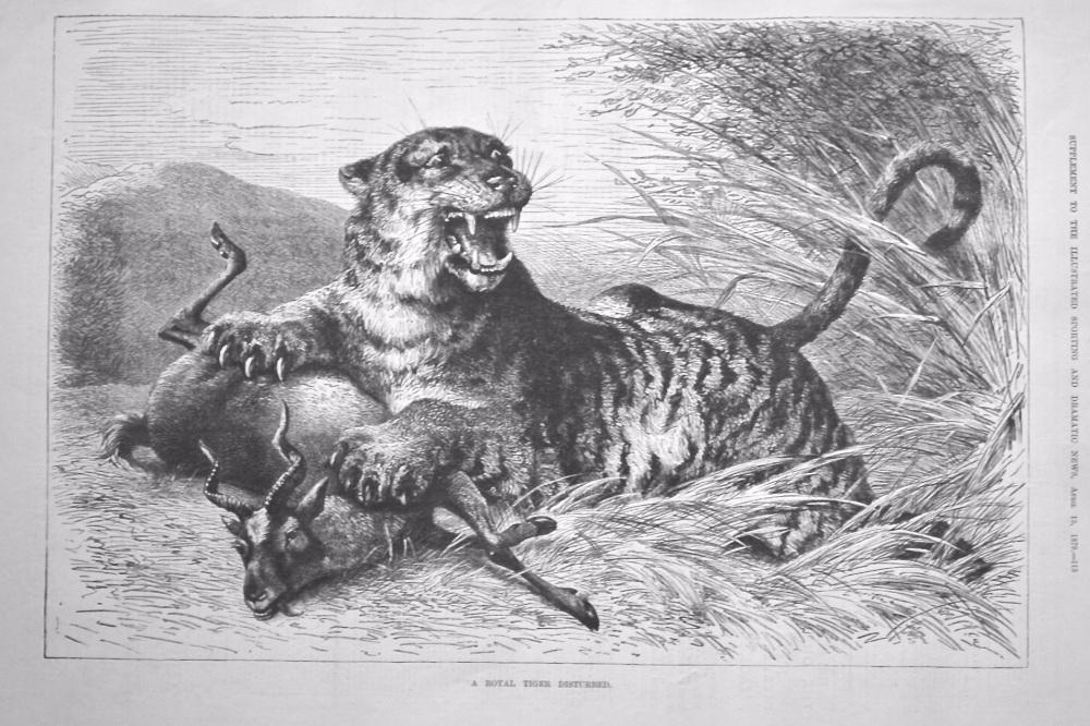 A Royal Tiger Disturbed.  1879.