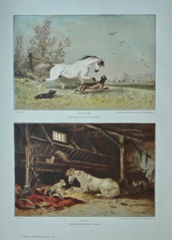 """""""Youth"""".  and  """"Age"""".  (Half Page Colour Pictures).  1884."""
