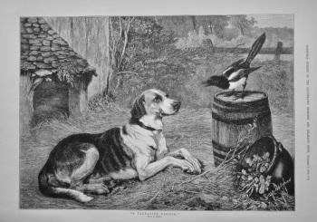 """""""A Talkative Visitor.""""  1882."""