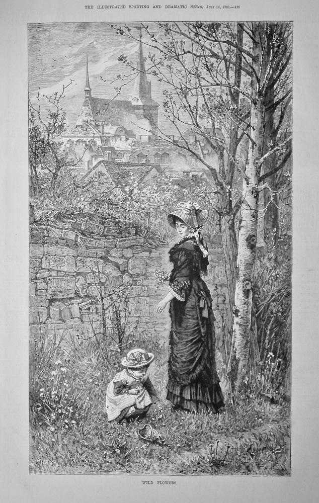Wild Flowers.  1881.