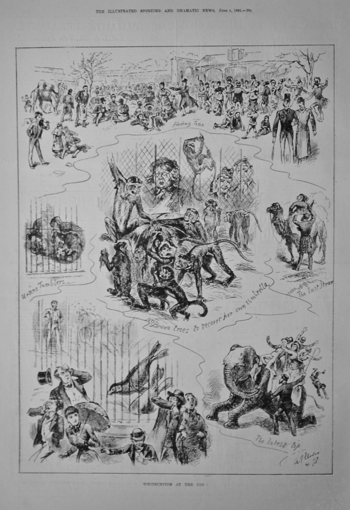 Whitsuntide at the Zoo !.   1881.
