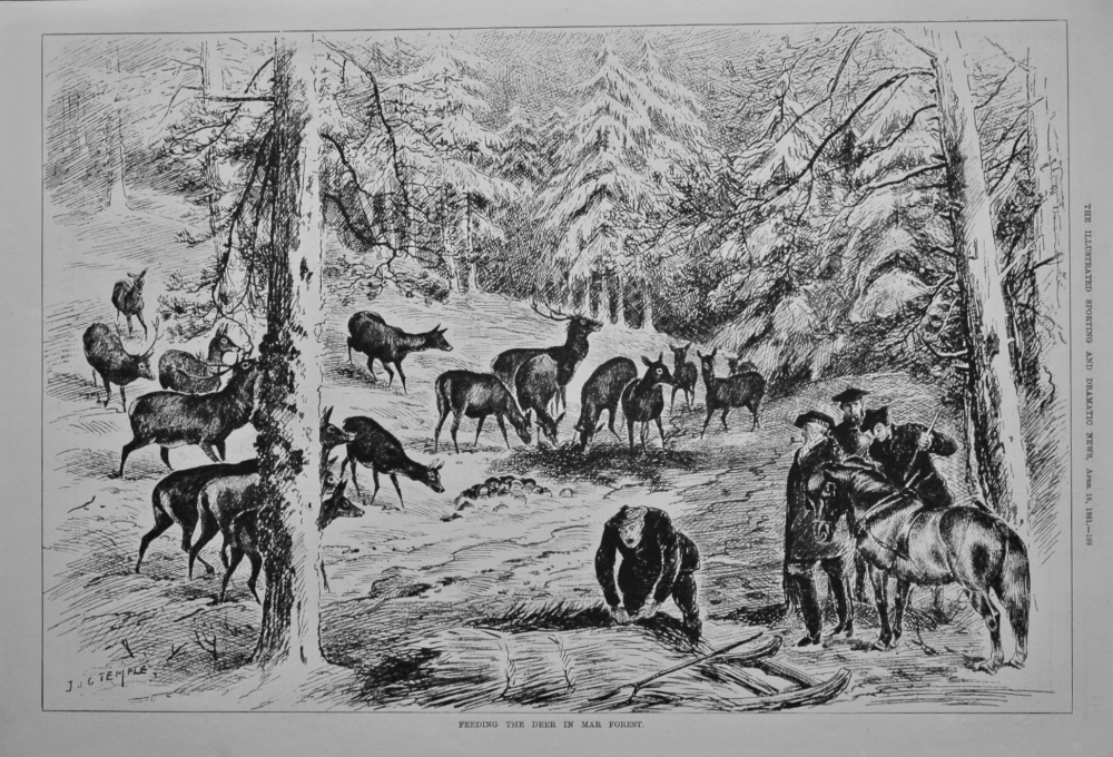 Feeding the Deer in Mar Forest.  1881.