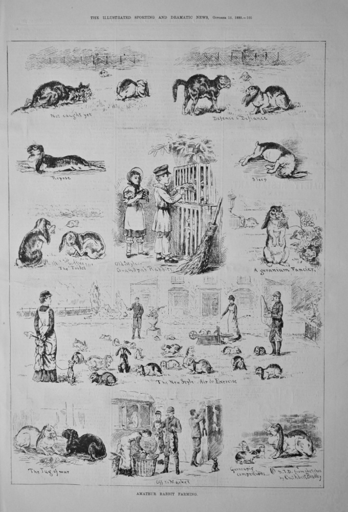 Amateur Rabbit Farming.  1880.