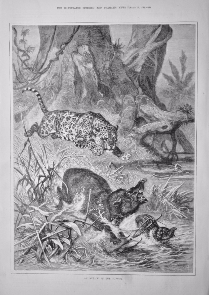 An Attack in the Jungle.  1881.