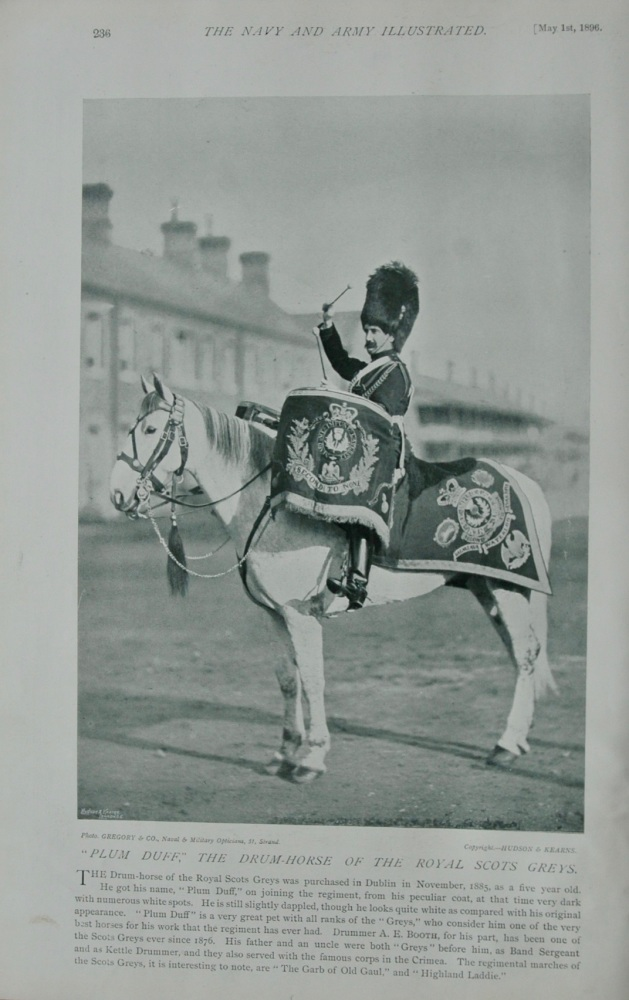 """Plum Duff,"" The Drum-Horse of the Royal Scot Guards."